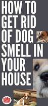 My Dog Stinks And Sheds A Lot by Best 25 Dog Smell Ideas On Pinterest Dog Urine Remover Pet