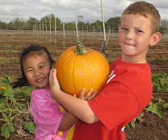 Elgin Christmas Tree Farm Pumpkin Festival by Get Spooked At These Kid Friendly Austin Halloween Events