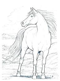 Arabian Horse Coloring Pages Awesome Best Of Realistic Print Printable