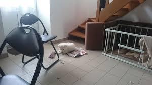 comment empecher chien de monter sur le canapé empècher un chiot de monter les escaliers