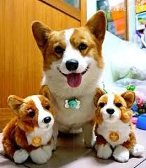Weekend Preview Brought to You By Corgis