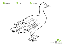 Goose Free Fun Coloring Sheets For Kids