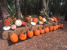 Pumpkin Patch Columbus Ga by Paradise Pumpkin Patch Alabama Haunted Houses
