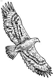 Coloring Pages Birds Secretary Bird Page Singing