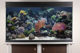 Aquascaping Live Rocks In Your Saltwater Aquarium Aquarium Aquascaping Rocks Aquascape Designs Ideas Project Reef Rock 21 Dry Walt Smith Bulk Supply Review Real Generation 4 Digitalreefs News Info How To Live Purple Live Rock Youtube Updated Clear Pics Newbies Attempt At Aquascaping So Far 3reef Design Aquafishvietcom Bring Back The Wall News Builders Keeping Austin Club Walls For A Tank Callorecom River Suggestion Planted Forum