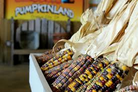 Pumpkin Patch Sioux Falls Sd by For Fun On The Farm In The Fall