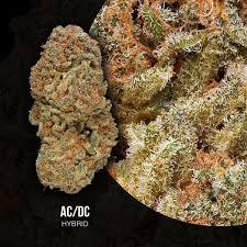 Best ACDC High CBD Strain Organic Cannabis