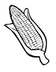 Drawing Corn Cob Coloring Page