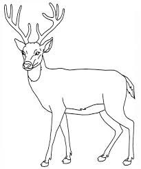 Superb Buck Deer Coloring Pages With Page And Antler
