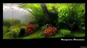 Hydrocotyle Sibthorpioides Aquarium - Google Search   AQUASCAPING ... Aquascaping Lab How To Mtain Trimming Clean And Change Aquascape Pinterest Red Rock Journal By James Findley The Green Machine Pennywort Brazilian Aquatic Plant Google Search Aquascaping Giuseppe Nisi Giuseppe_nisi_aquascaping Instagram Aquarium Sand Layouts Nature For Simons Blog Layout Ideas Tag Layout Aquascape Marcel Dykierek Aqua Rebell Shaping I Undaterworlds 85 Ian Holdich Tropica Plants