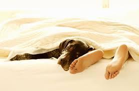 fünf gründe warum haustiere nicht im bett schlafen