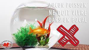 le site du poisson quel poisson dans un bocal