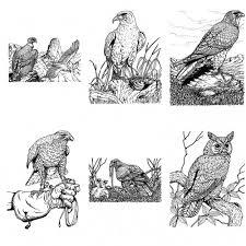 Adult Coloring Book Birds Of Prey