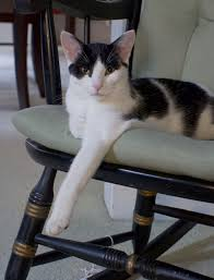 A Picture Each Day: The Regal Cat