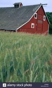 N.A., USA, Washington. Old Red Barn In Barley Field Near Waitsburg ... Red Barn Washington Landscape Pictures Pinterest Barns Original Boeing Airplane Company Building Museum The The Manufacturing Plant Exterior Of A Red Barn In Palouse Farmland Spring Uniontown Ewan Area Usa Stock Photo Royalty And White Fence State Seattle Flight Interior Hip Roof Rural Pasture Land White Fence On Olympic Pensinula