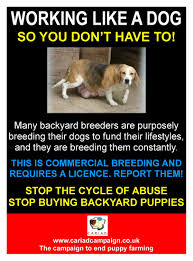 The Pics On Remarkable Backyard Breeders Dogs Vip Breeding Vs ... Pit Bulls And Other Animals War On Backyard Breeders San Photo The Farming Cnection With Breathtaking Houses Romantic Italian Paul Guy Gantner Pating Italy Wonderful Dusk Beautiful Evening Architecture Cars That Refuse To Die Images Charming Mechanic Best Of Definition Vtorsecurityme St Louis Pergolas Your Is A Blank Canvas For Malibu Build Picture Terrific Mechanical Fernie Home Decor Neo Classic Design Concept Pergola Deck Ideas High 89y