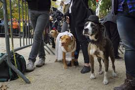 Tompkins Square Park Halloween Dog Parade Winner by Seeing Pets As Extensions Of Ourselves Is A Troubled Practice