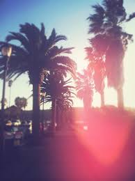 California Palm Trees Sunset Quotes Tree Photography Tumblr