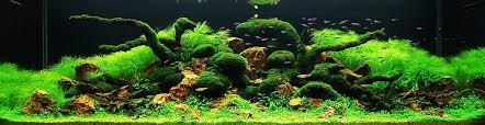 aquarium d eau douce aquascaping les plus beaux aquariums
