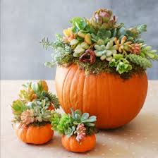 Lumpkin The Pumpkin Book by No Need To Cut Into The Pumpkin With This Beautiful Yet Simple
