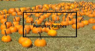 Pumpkin Patch Maryland by Dehaven U0027s Transfer U0026 Storage Blog