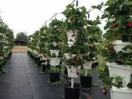 Hydroponics - Backyard Food SolutionsBackyard Food Solutions Hydroponic Home Garden Backyard Food Solutionsbackyard Oc Aquaponics Project Admin What Is Learn About Aquaponic Plant Growing Photos Friendly Picture With Amusing Systems Grow 10x The Today Bobsc Ezgro Amazoncom Vertical Gardening Vegetable Tower Indoor Outdoor From Fish To Ftilizer Greenhouse Im In My City Back Yard Yes I Am Satuskaco