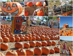 Irvine Pumpkin Patch Hours by Pumpkin Patches Plan A Day Out Blogpumpkin Patches Archives