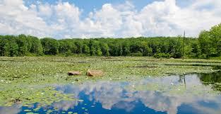 100 Wildcat Ridge Wildlife Management Area Conserve Wildlife