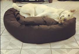 Mammoth Dog Beds by Every Perfect Dog Deserves An Equally Perfect Bed