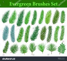 Christmas Trees Types by Collection Evergreen Coniferous Trees Branches Brushes Stock