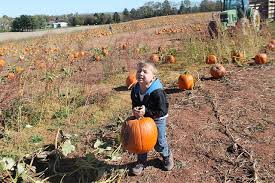Frederick Maryland Pumpkin Patch by Corn Maze U201cdares To Be Different U201d And Showcases Pop Diva Taylor Swift