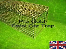 live cat trap cat trap trap feral cat trap humane and effective feral cat