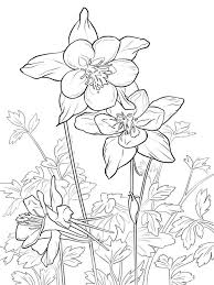 Columbine Flower Coloring Pages 9