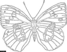 Butterfly Big Coloring Pages For Kids Printable