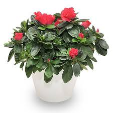 Best Plant For Bathroom by 5 Best Plants For Green Bathroom Quiet Corner