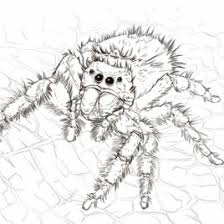 Camel Spider Coloring Page Free Printable Pages
