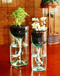 Small Plants For The Bathroom by Bathroom Design Wonderful Impatiens Plant Small House Plants Low