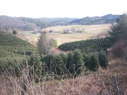 Christmas Tree Farms In Boone Nc by The Families Of Frances Wilson Osborne And G W Osborne Jr