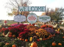 Pumpkin Patch Homer Glen Il by Best Local Pumpkin Patches