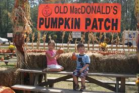 Pumpkin Patch Houston Tx Area by Old Macdonald U0027s Pumpkin Patch Picture Of Old Macdonald U0027s Farm