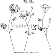 California Flower Clip Art Illustration
