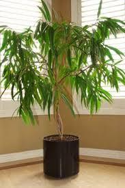 arrosage des plantes d intérieur ou en pot
