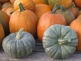Best Pumpkin Patch Des Moines by 99 Best Our Iowa Pumpkin Patch And Corn Maze Images On Pinterest