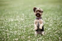 shed the least dog breeds dog breeds dogthelove