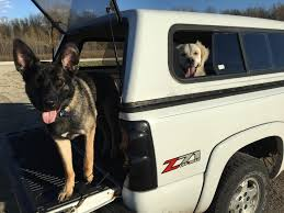 Truck Dogs : Trucks Best Dog Crate For Pickup Truck Beds Soft Plastic Alinum Bearded Dogs Food Truck Is Now Sling Gourmet Dogs At A Brewery Dog 2 Album On Imgur And Richmond Sand Gravel Landscaping Large Seen In The Back Of A Waiting Its Owner Stock Bernese Mountain Puppies In Doggies Swiss Takes Semi On Joyride Crashes Into Tree And Parked Car Treat East Greenbush Albany Ny Mugzys Barkery Cowgirl Driving Old Stocksy United Pbs 4 Axle Delivery Muscat Arizona Patrol Volunteer Saves Tied To Heading 3 Trailer