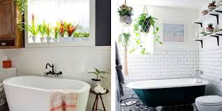 Plants In Bathroom Vastu by Bathroom Snakeplant1 Plants For The Bedroom 2017 40 Plants For