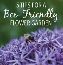 5 tips for a more bee friendly flower garden longfield gardens