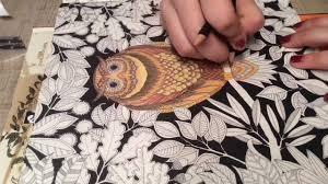 Secret Garden Owl