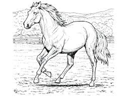 Full Image For Horse Coloring Sheets Adults Beautiful Pages Printable Gallery