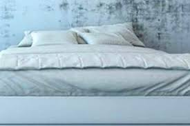 schimmel im schlafzimmer hilfe bei hausschimmel hier